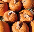 Starberry Farms Pumpkin Patch
