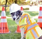 Rancho Pet Adoption Fair